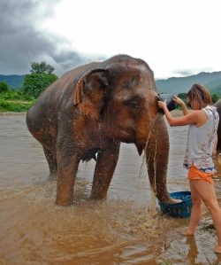 Bathing the Elephants!