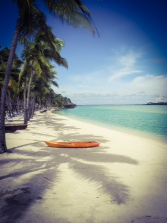 Palm trees and Kayaks