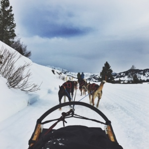 jackson hole dog sledding