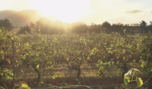 The Hunter Valley – A 'Grape' Escape