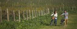 Images via Spicers Vineyards webiste