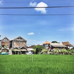 Rice fields flank the local cafes around Canggu!